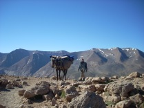 Trek with mules in Atlas Mountains